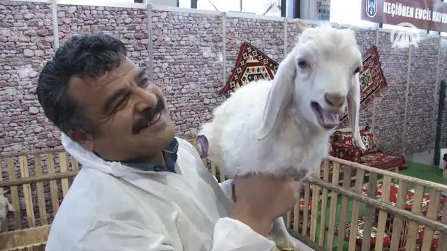 PetZoo Evcil Hayvan Ürünleri Fuarı açıldı
