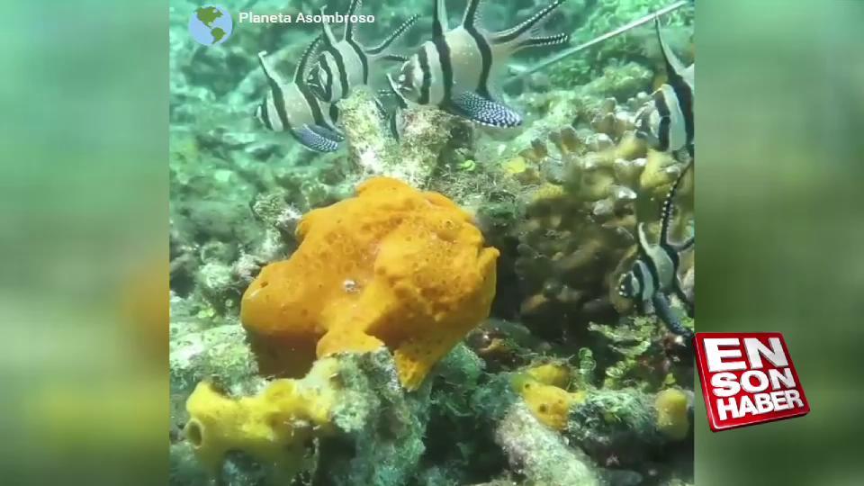 Kamuflaj ustası balık