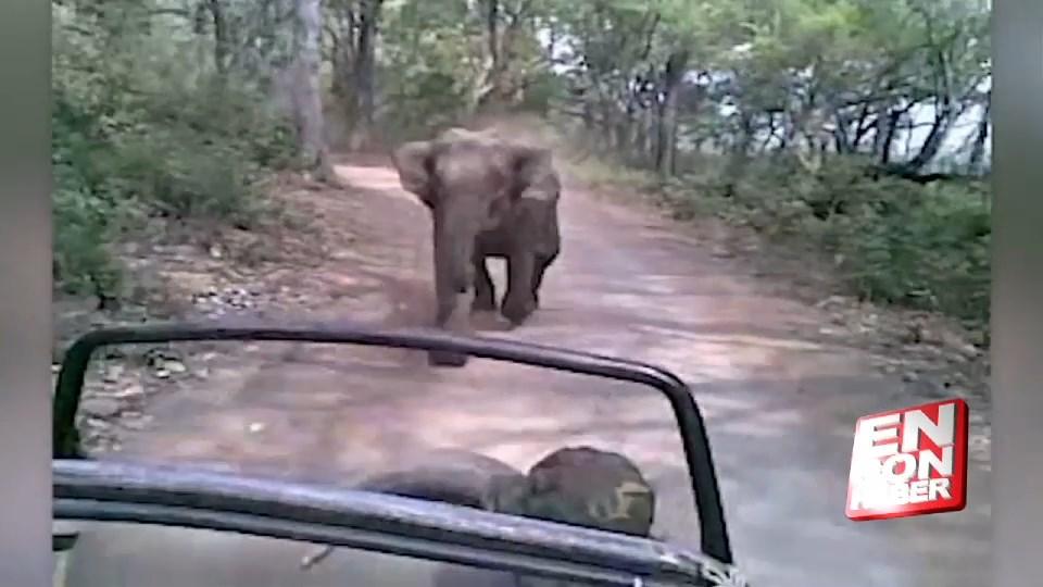 Hindistan'da fil turistleri kovaladı
