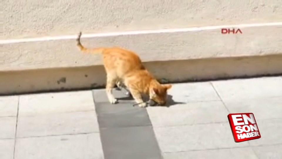 Kedinin fareyle oyunu