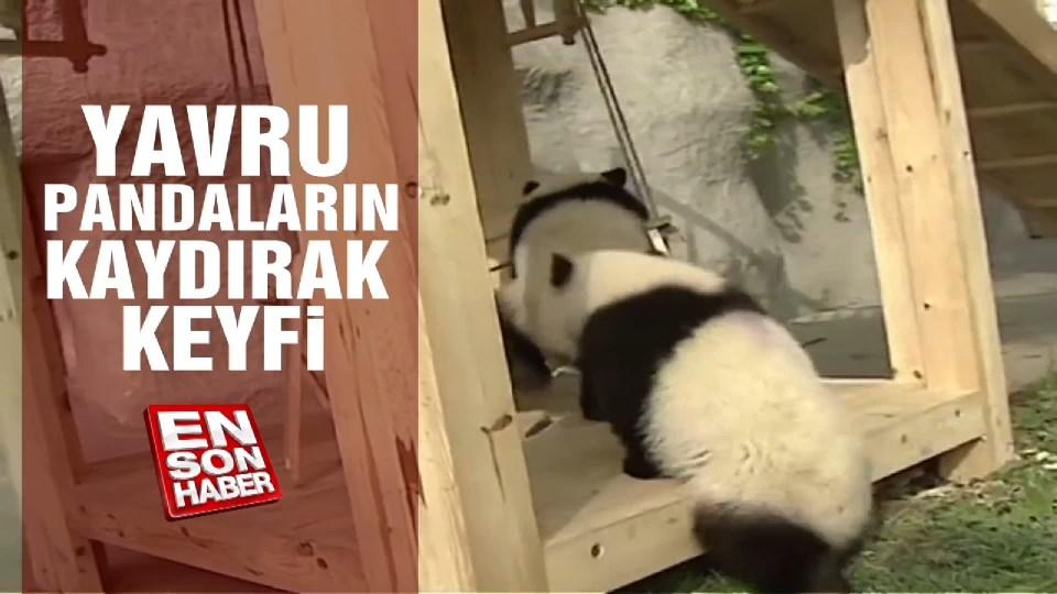 Yavru pandaların kaydırak keyfi