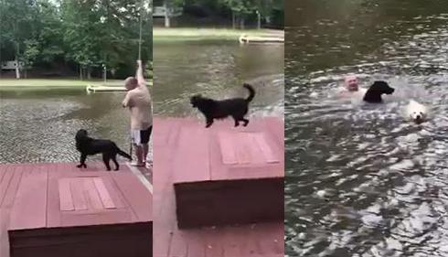 Sahibinin boğulduğunu zanneden köpekler suya atladı