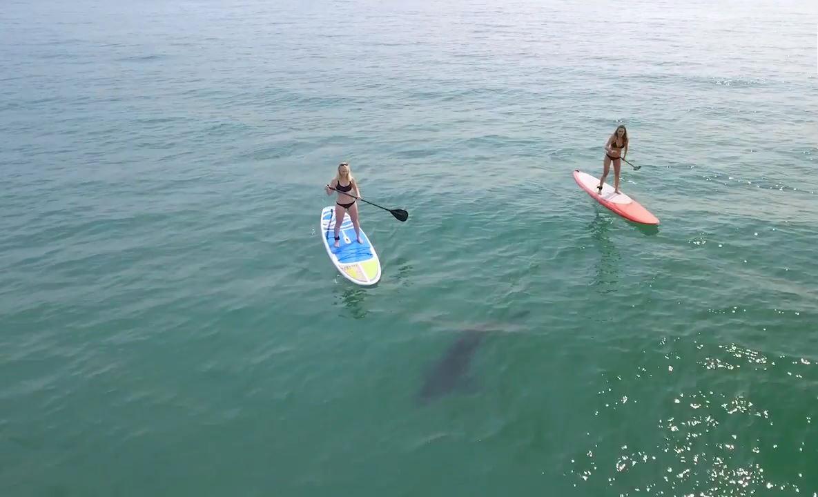 Köpek balığı eşliğinde su yogası yapan kadınlar