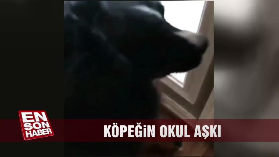 Köpeğin okul aşkı