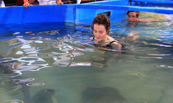 Turistlerin köpek balıklarıyla yüzme keyfi