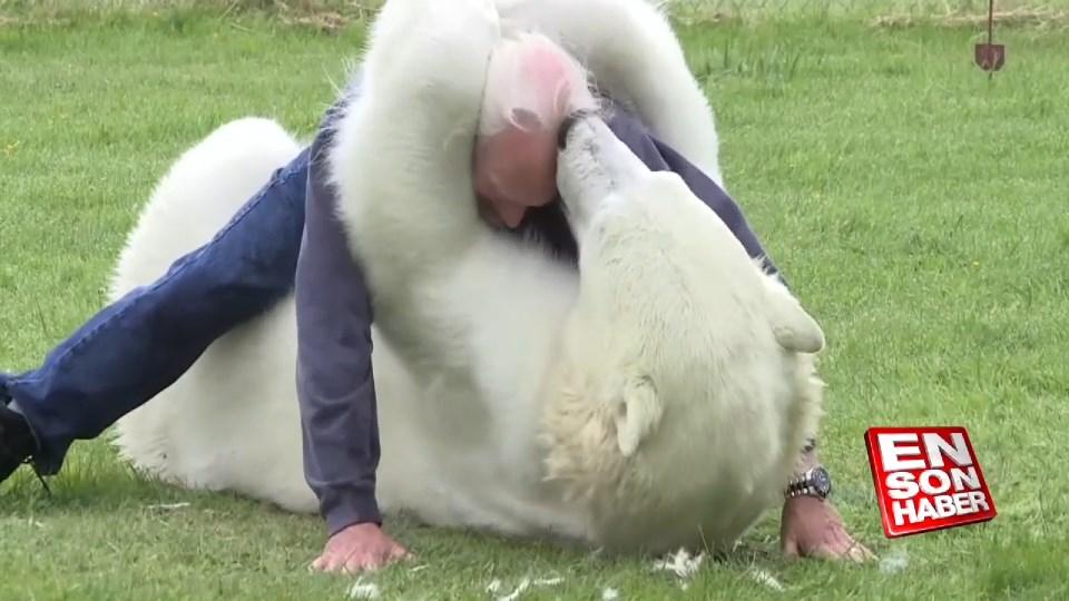 Kutup ayısıyla dost olan adam