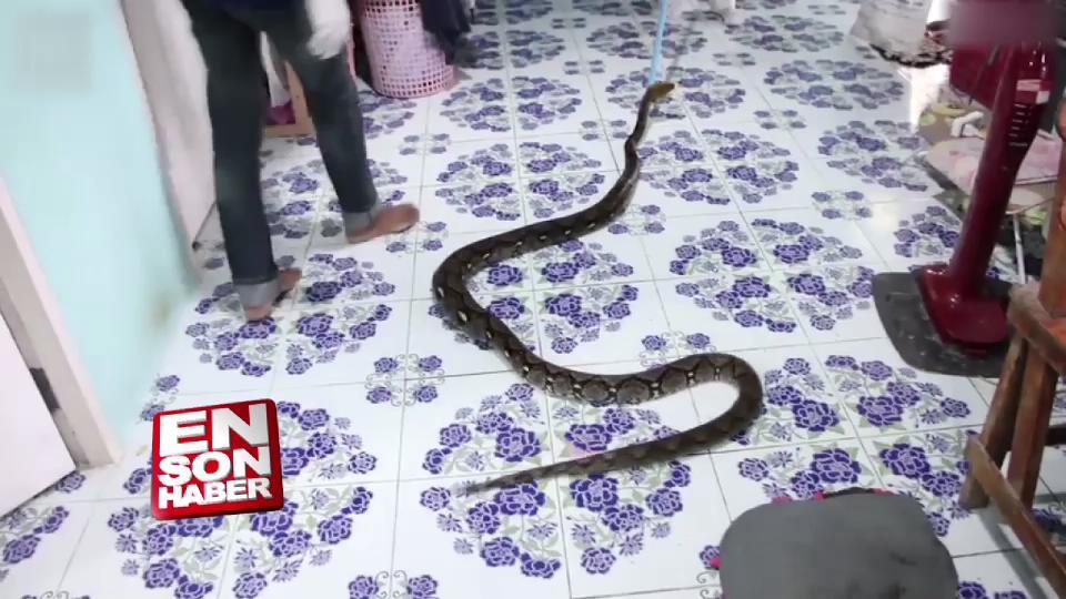 Tayland'da 13 yaşındaki çocuğun yatağından yılan çıktı