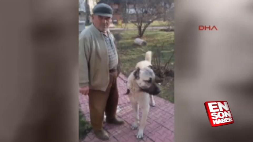 Arazide ölen adamın yerini köpeği gösterdi