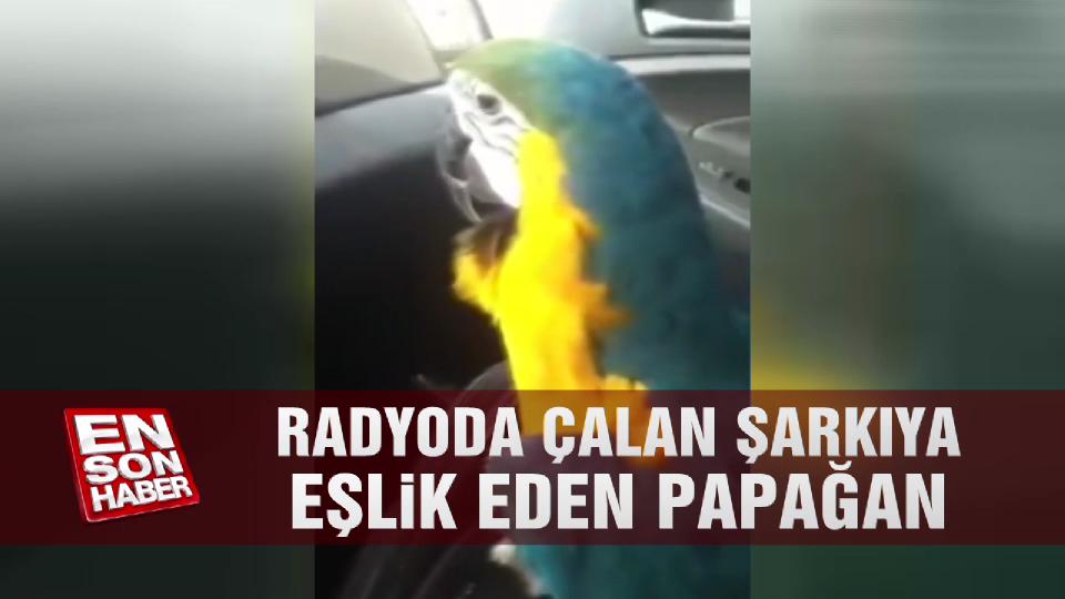 Radyoda çalan şarkıya eşlik eden papağan