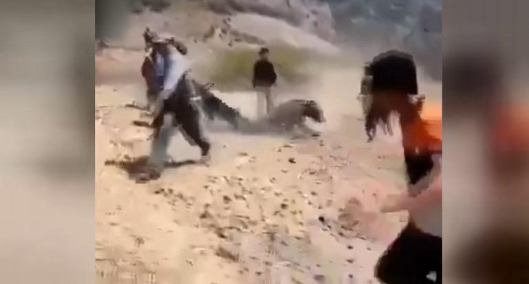 Süleymaniye'de peşmergelere saldıran ayı