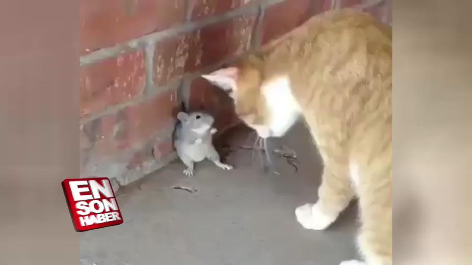 Farenin kedi ile karşılaşması