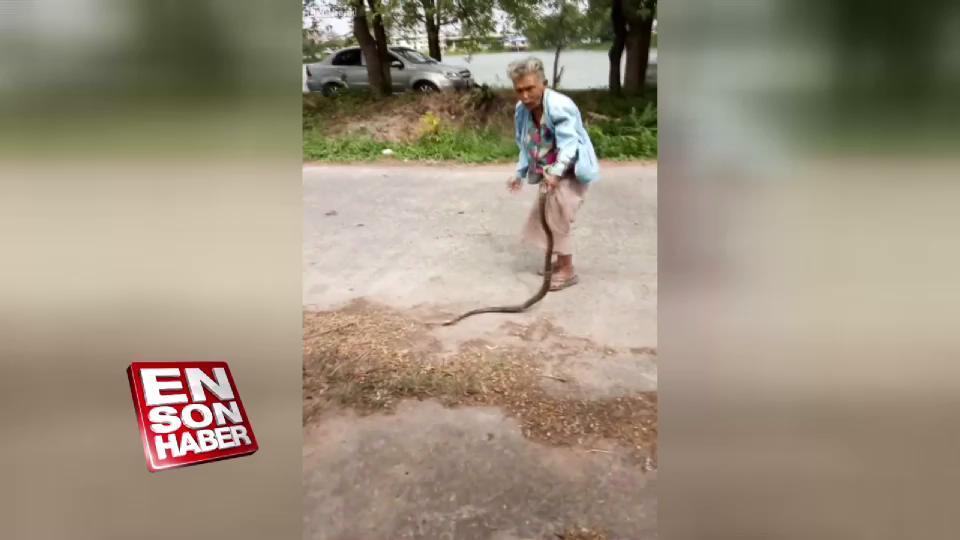Yılanı yere vurarak öldüren yaşlı kadın