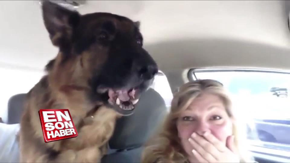 Veterinere geldiğini anlayan köpeğin komik tepkisi