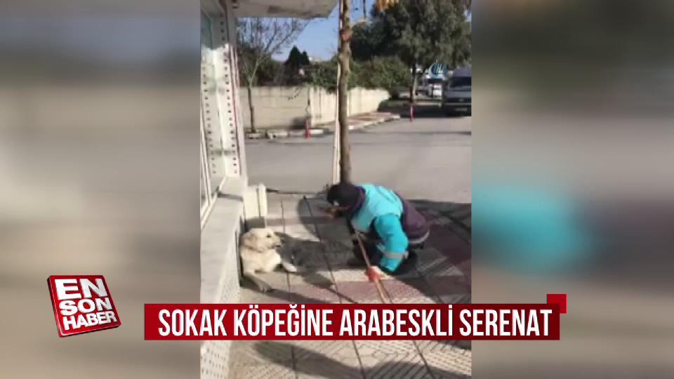 Temizlik işçisinden sokak köpeğine arabeskli serenat