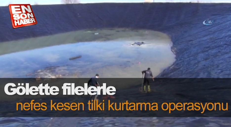 Gölette filelerle tilki kurtarma operasyonu