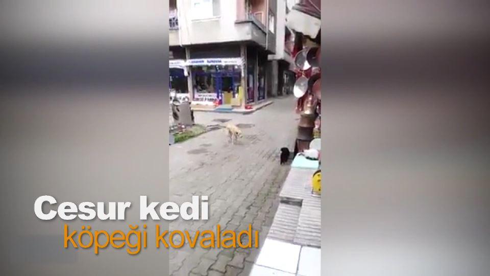 Cesur kedi, köpeği kovaladı