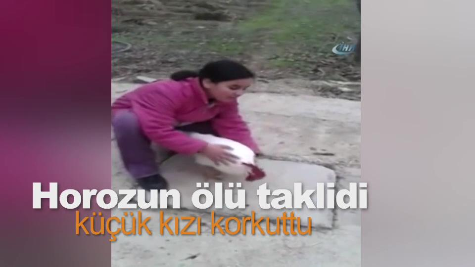 Horozun ölü taklidi küçük kızı korkuttu