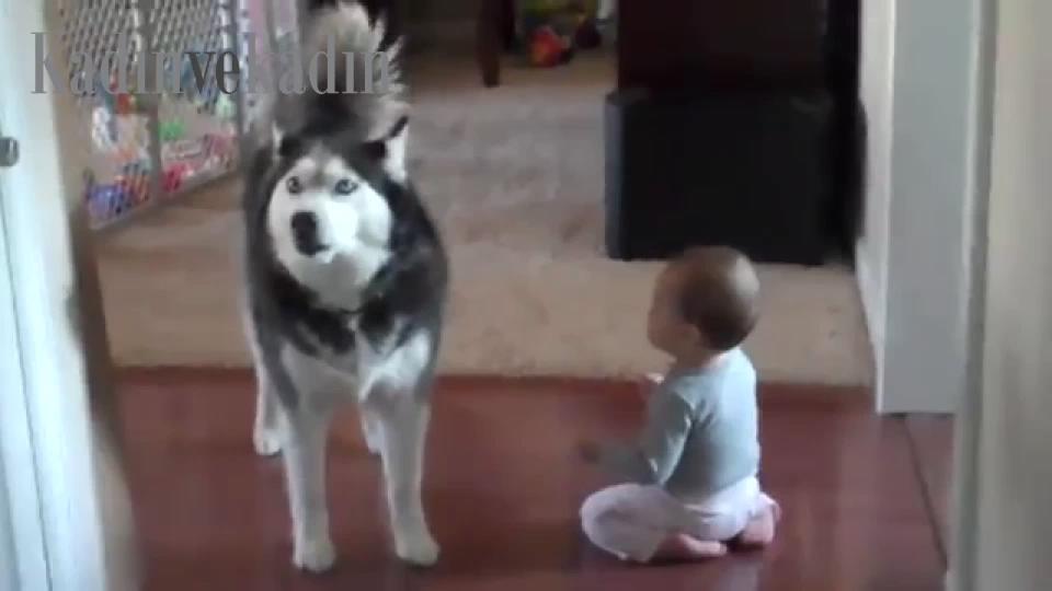 Köpekle düet yapan bebek