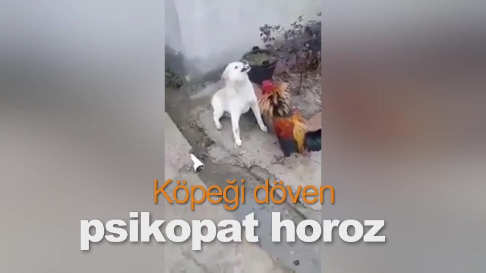 Köpeği döven psikopat horoz