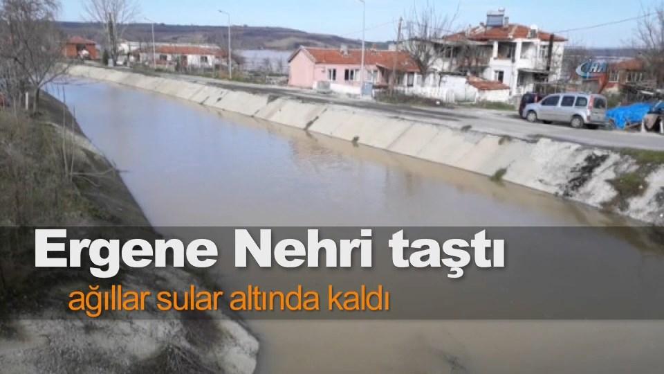 Ergene Nehri taştı, ağıllar sular altında kaldı