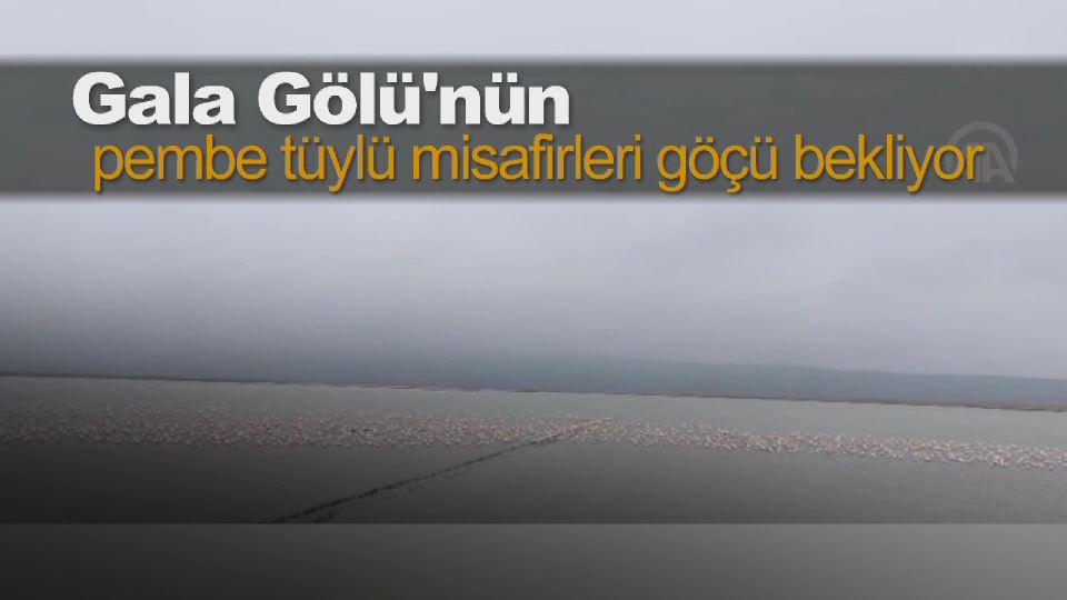 Gala Gölü'nün pembe tüylü misafirleri göçü bekliyor