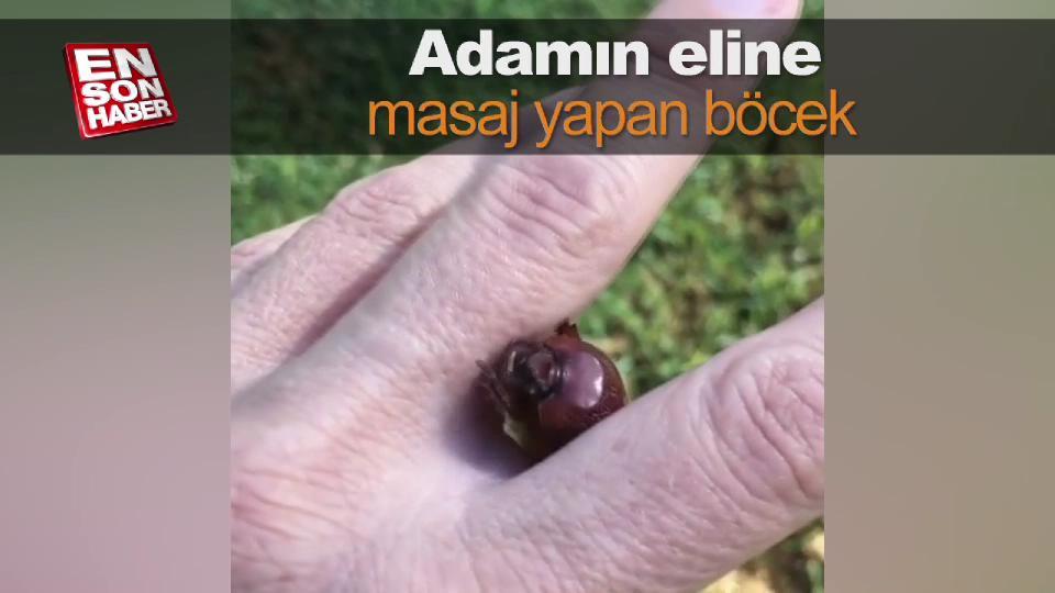 Adamın eline masaj yapan böcek