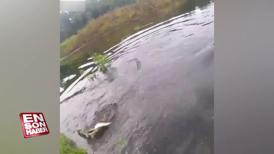 Yakaladığı balığı timsaha kaptırdı
