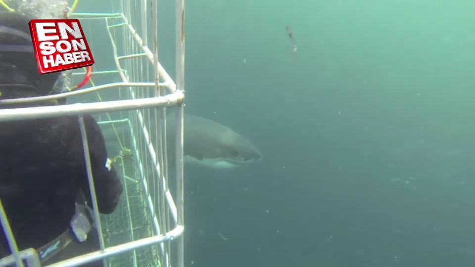 Kafesli köpekbalığı dalışı deneyimi