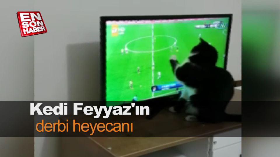 Kedi Feyyaz'ın derbi heyecanı