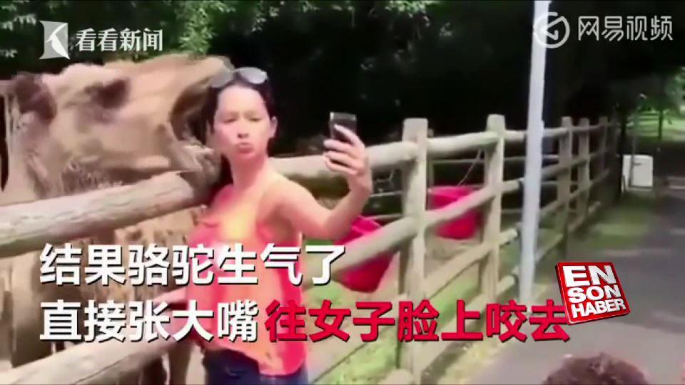 Selfie çekmek isteyen kadını ısıran deve