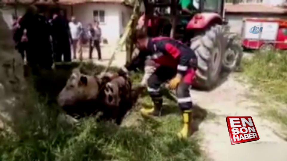 Denizli'de itfaiye ekipleri zor durumda kalan ineği kurtardı