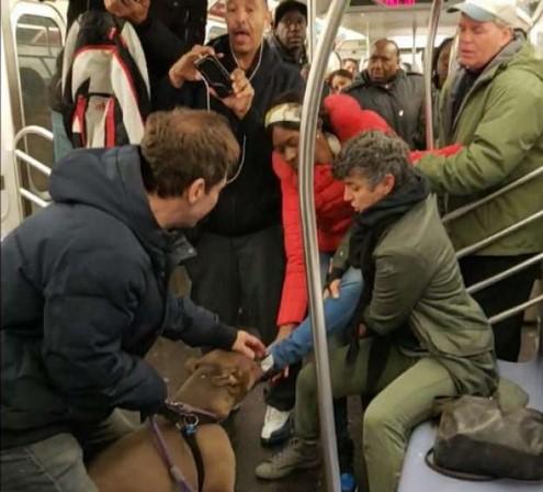 New York metrosunda pitbull saldırısı
