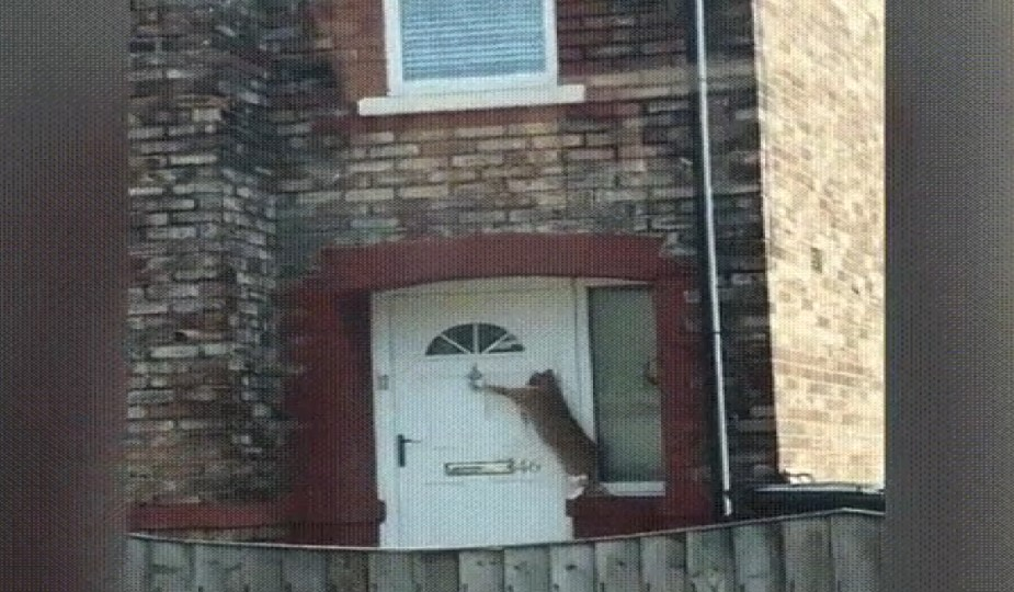 Kapıyı çalan kedi