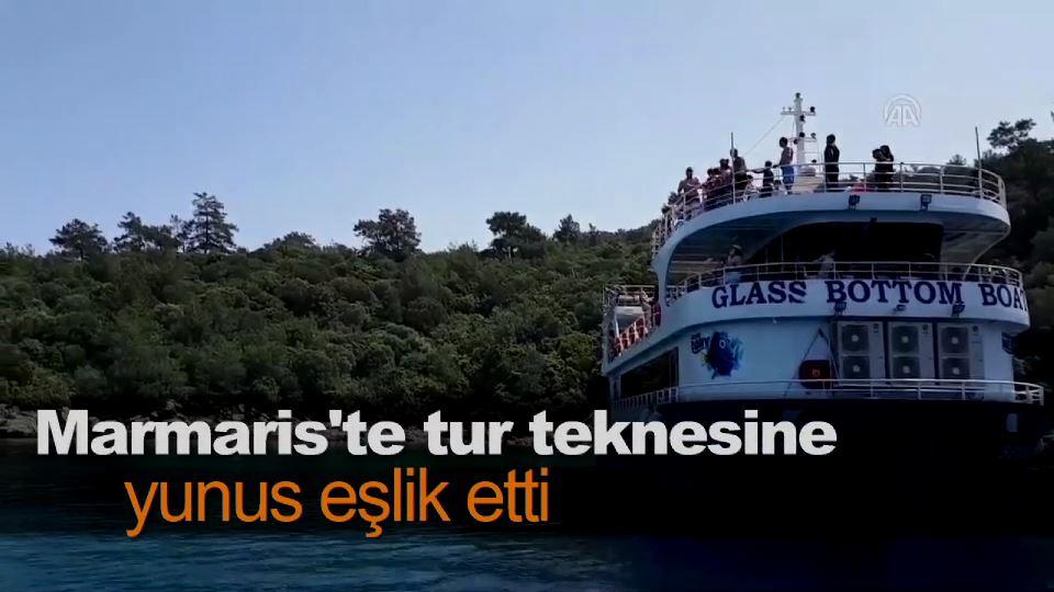 Marmaris'te tur teknesine yunus eşlik etti