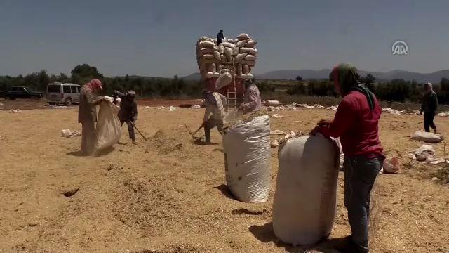 Saman işçilerinin zorlu mücadelesi