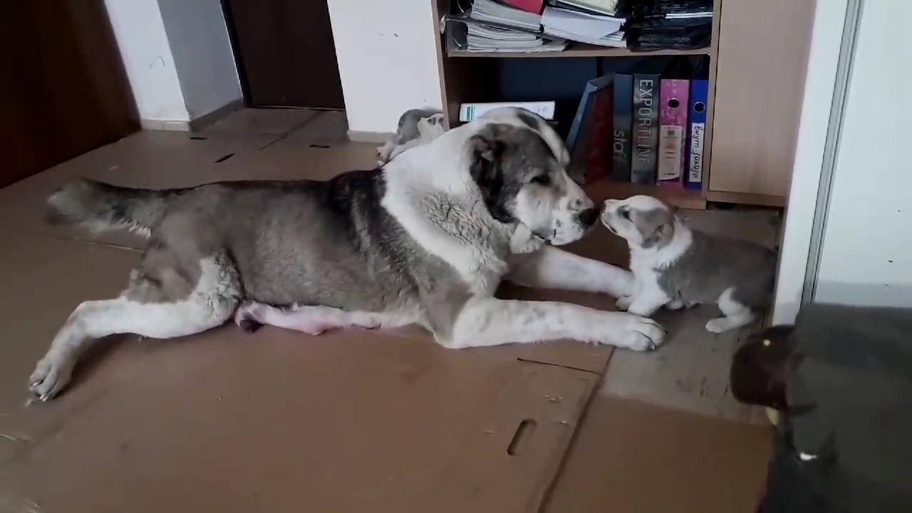Annesine kafa tutan yavru köpek