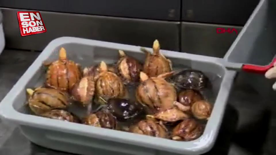 Valizden 9 çeşit hayvan çıktı