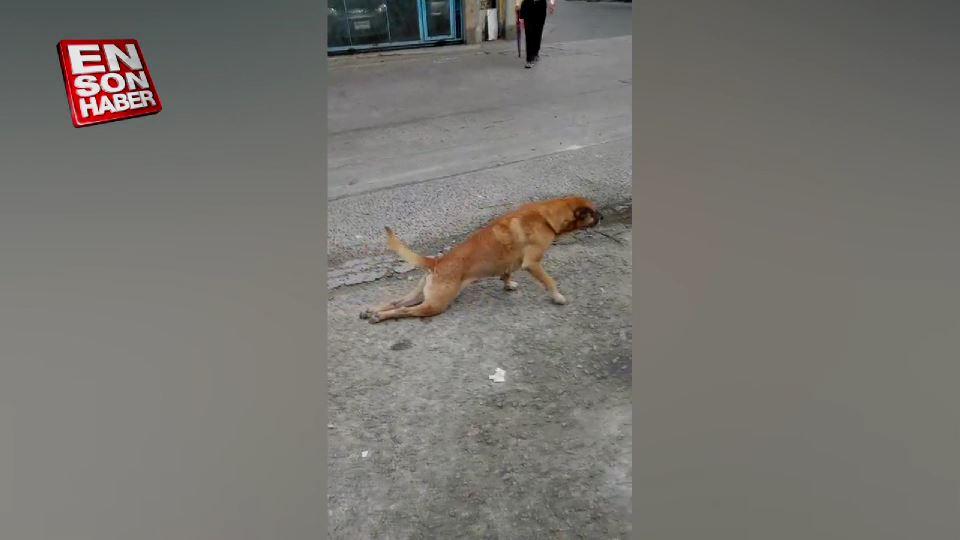 Sakat numarası yapan köpek