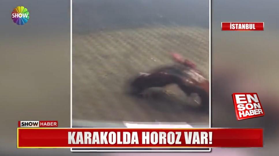 Sultangazi'de horoz dövüşü çetesine baskın