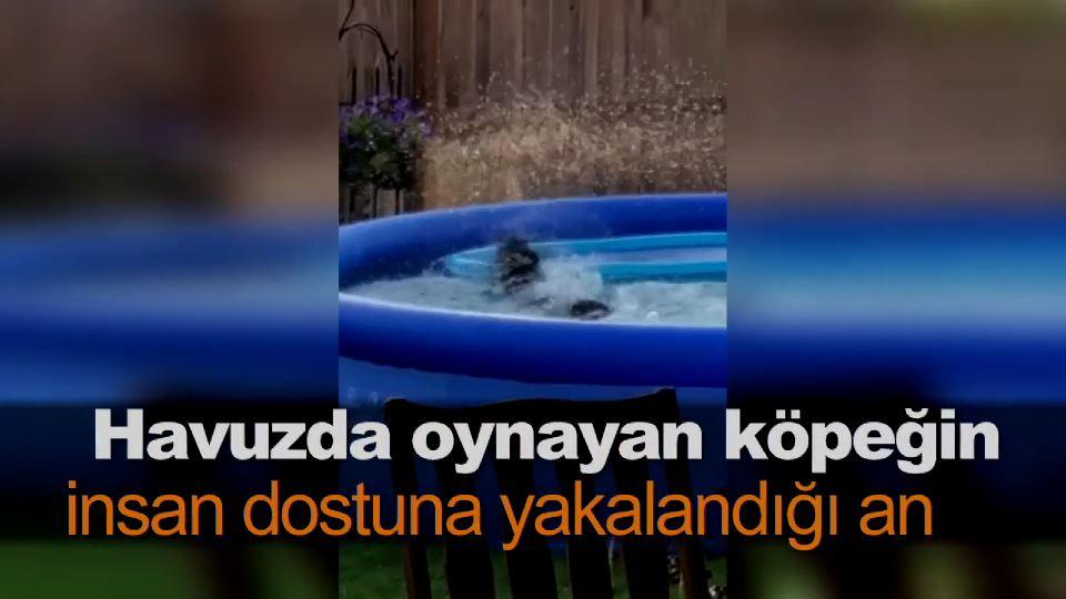 Havuzda oynayan köpeğin insan dostuna yakalandığı an
