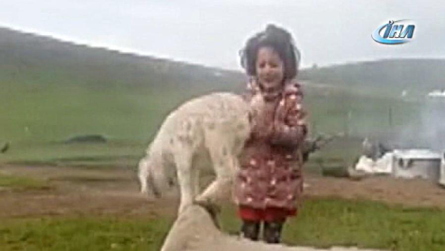 Minik kız keçi yavrusunu şarkı söyleyerek dans ettirdi