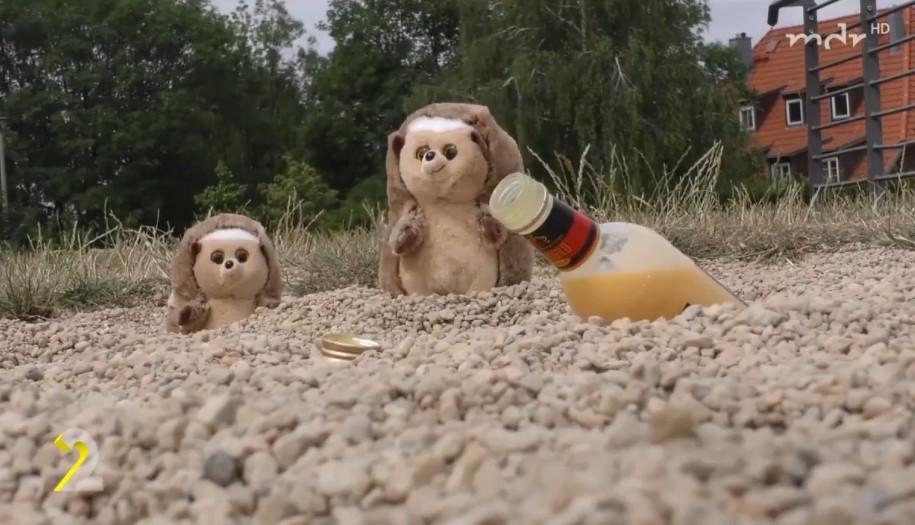 Almanya'da polise sarhoş kirpi ihbarı