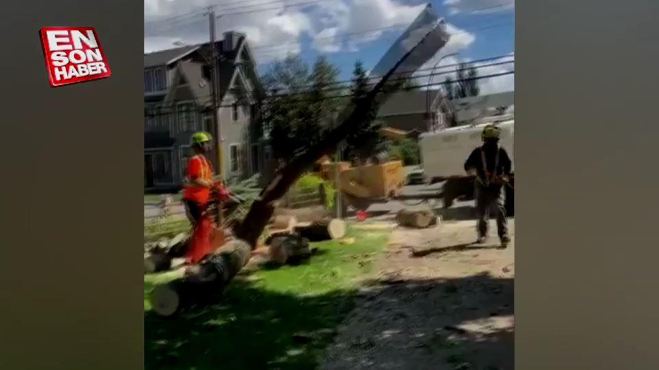 Kesilen ağaç işçinin üzerine devrildi
