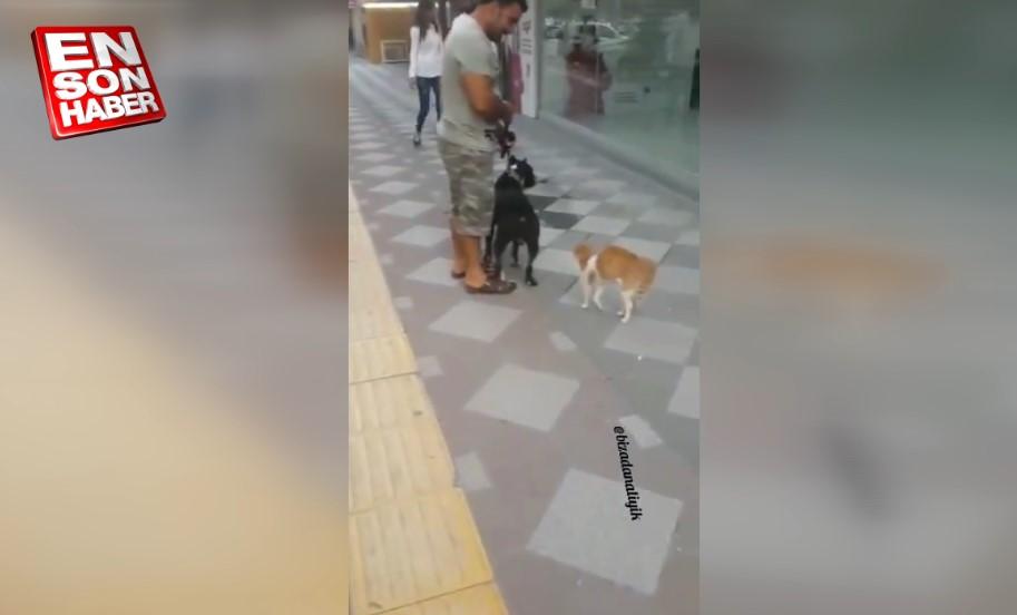 Adana'nın psikopat kedisi mırmır